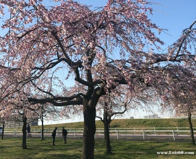 日本新增新冠肺炎患者308人 累计确诊3438例