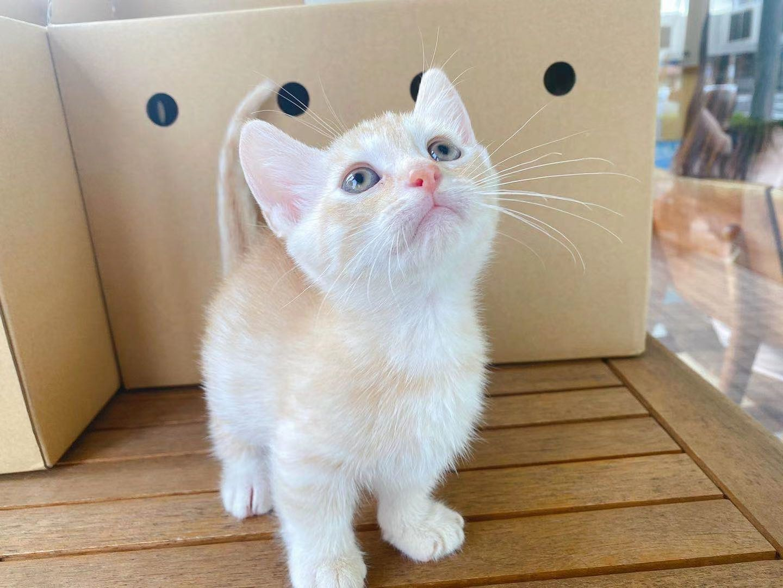 猫咪两只小短腿