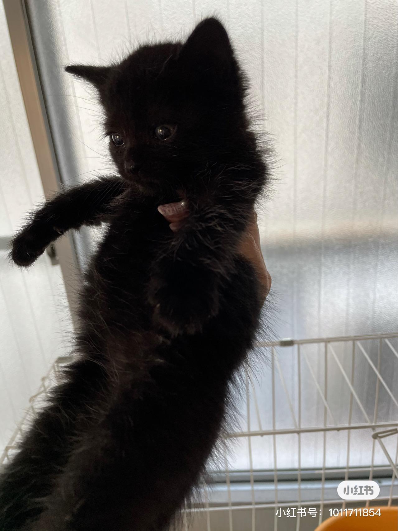 黏人小黑貓