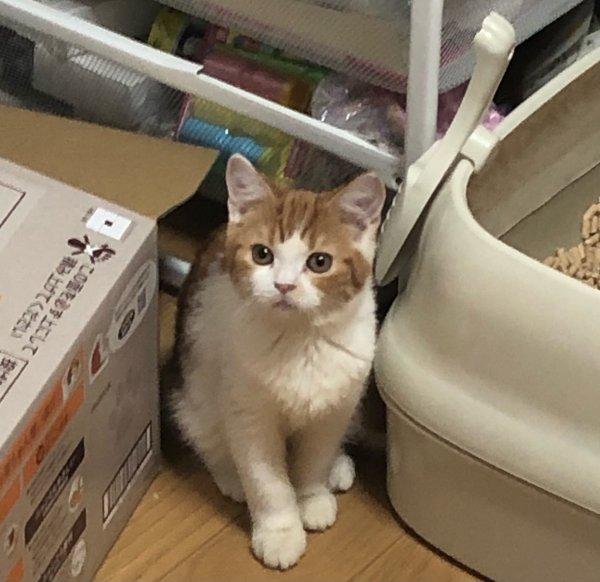 出一只小公猫