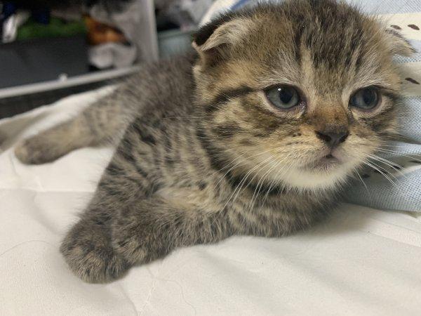 三月17的猫猫