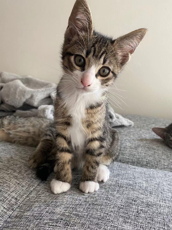 最后一只小公起司猫。8万