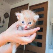自家出生的猫猫接受预定啦!