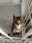 自家小猫,2公一母,3万每只